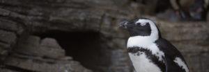 準備は大丈夫?ペンギンアップデート3.0の順位回復事例から見るペンギン対策