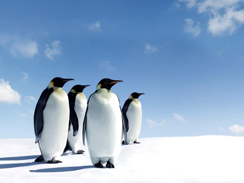 【ペンギンアップデート4.0実施】今見直しておきたい。SEOにおける『良い被リンク』『悪い被リンク』の見分け方